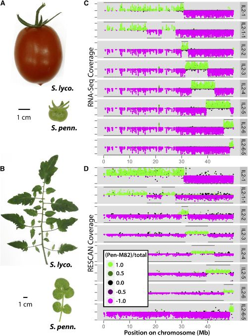 Image from A Quantitative Genetic Basis for Leaf Morphology in a Set of Precisely Defined Tomato Introgression Lines
